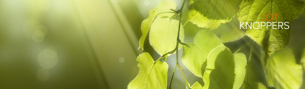 bladeren-blank.jpg